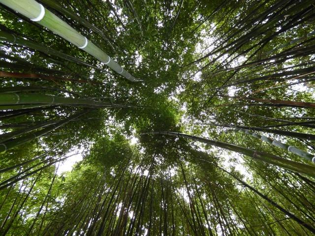(24) Bambouseraie de Planbuisson - Le Buisson de Cadouin P1020312