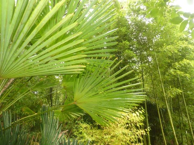 (24) Bambouseraie de Planbuisson - Le Buisson de Cadouin P1020413