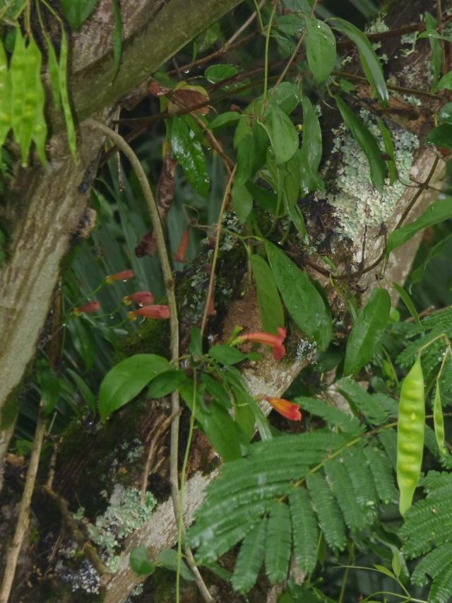 (24) Bambouseraie de Planbuisson - Le Buisson de Cadouin P1020414