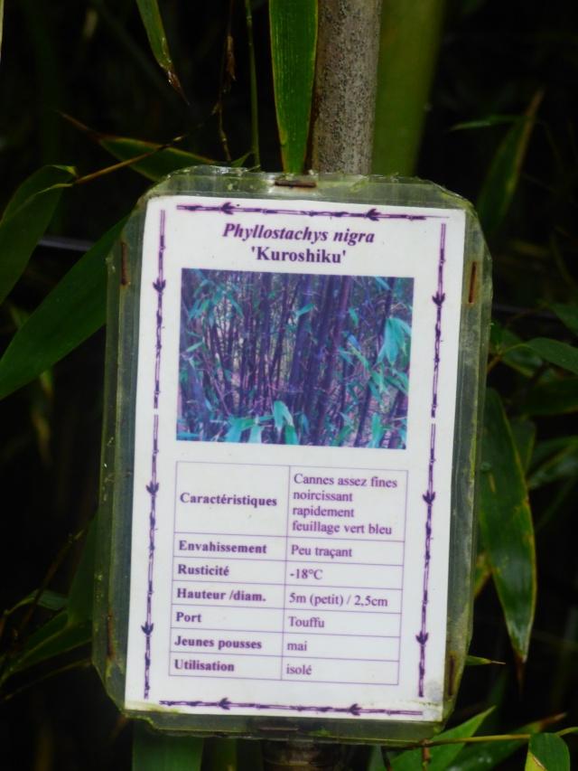 (24) Bambouseraie de Planbuisson - Le Buisson de Cadouin P1020415