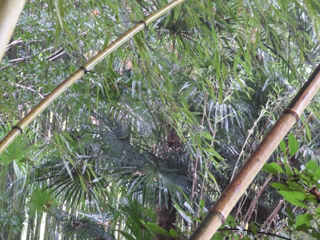 (24) Bambouseraie de Planbuisson - Le Buisson de Cadouin P1020417
