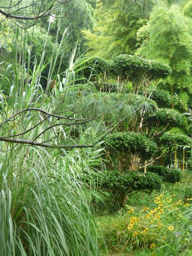 (24) Bambouseraie de Planbuisson - Le Buisson de Cadouin P1020419