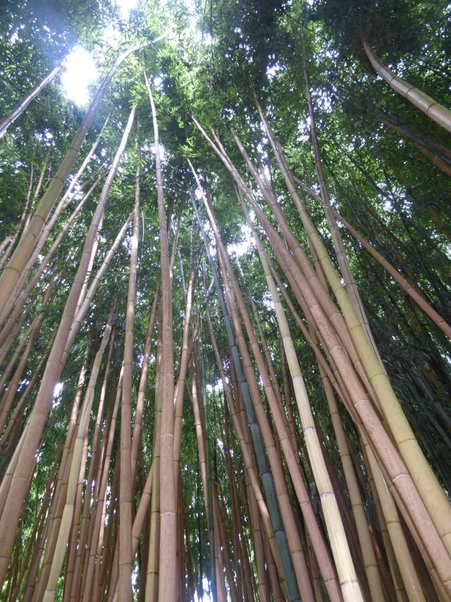 (24) Bambouseraie de Planbuisson - Le Buisson de Cadouin P1020512