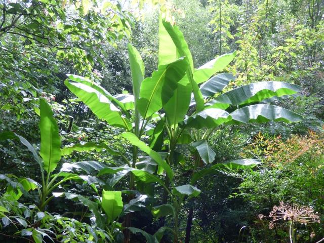 (24) Bambouseraie de Planbuisson - Le Buisson de Cadouin P1020513