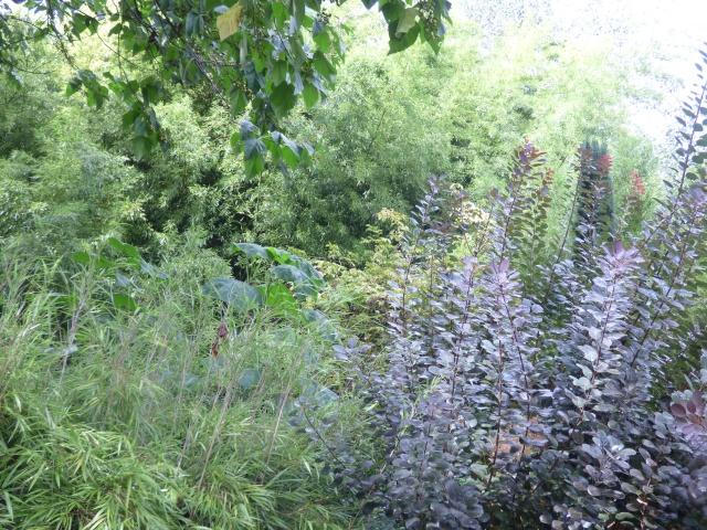 (24) Bambouseraie de Planbuisson - Le Buisson de Cadouin P1020514