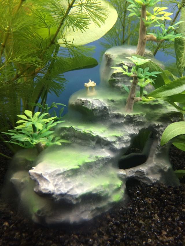 Lancement de mon 1er aquarium 175l - Page 2 Img_0010