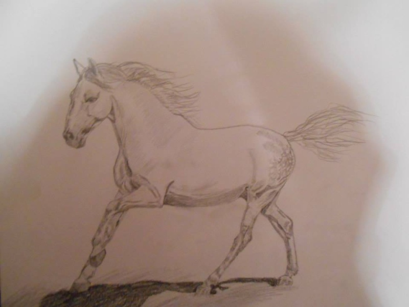Quelques dessins/peintures de bestioles 10356410