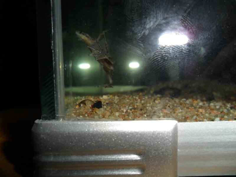 Mes grenouilles de petites tailles - Page 2 Sam_3617