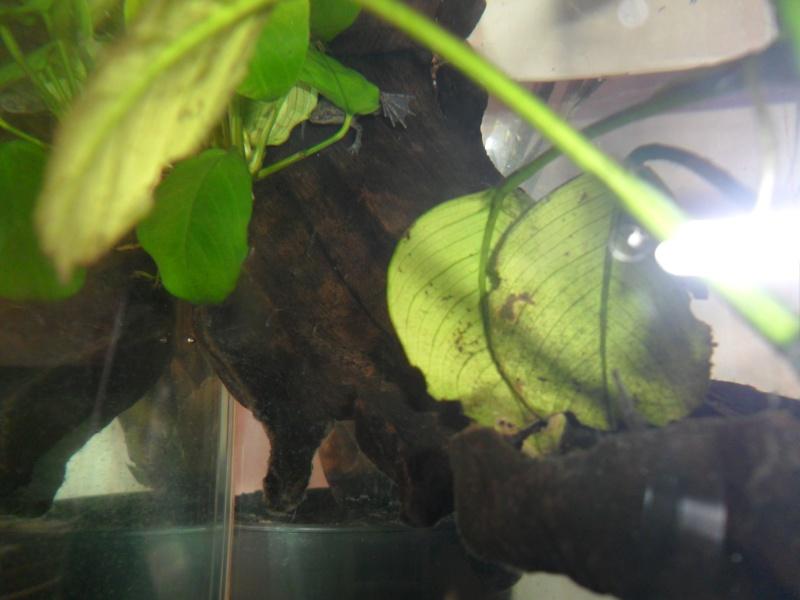Mes grenouilles de petites tailles - Page 3 Sam_3735