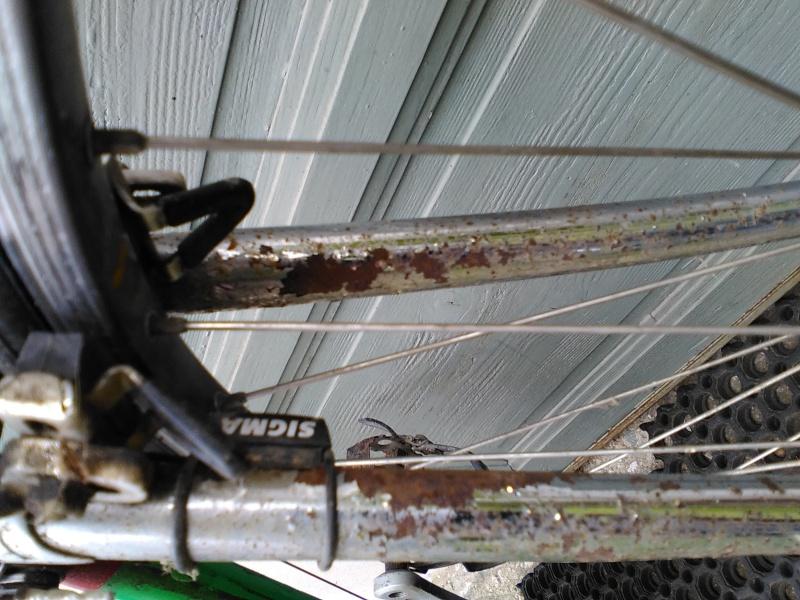 Mon premier Merckx Corsa Img_2023