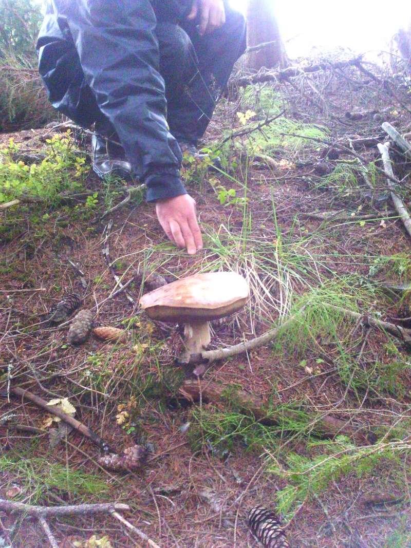 séjour en norvège (région de skarnsundet) septembre 2014 Img_2013