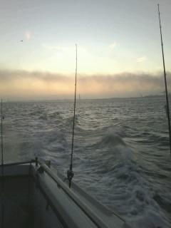 sortie en mer le lundi O2 novembre Photo044
