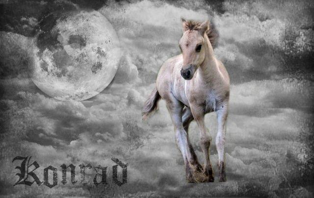 K O N R A D, poulain de la lune. - Page 2 White-11