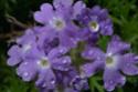 Цветы в мире магии Eeez10