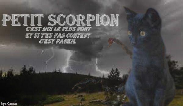 Petit Scorpion Petit_13