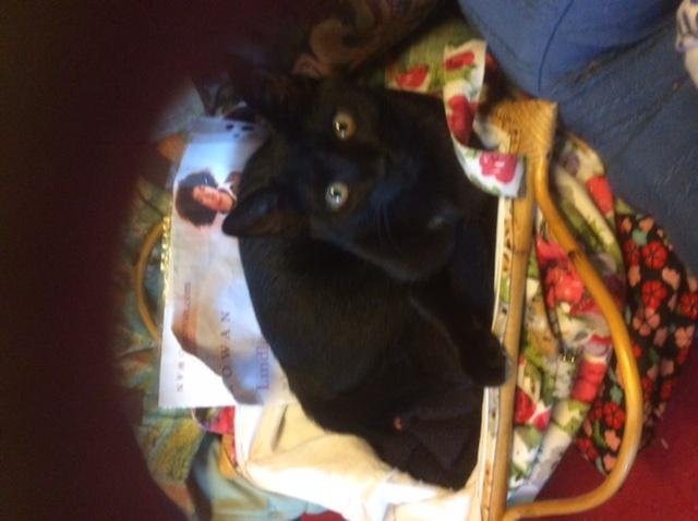 Lutine, chatonne noire de type européen, née le 20/04/2015 Image112