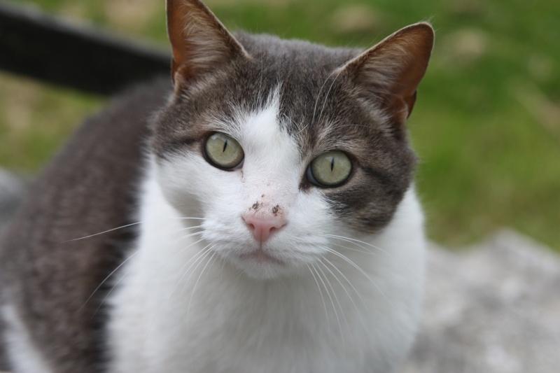 fethi - FETHI male gris et blanc né en 10/2010 Img_1610