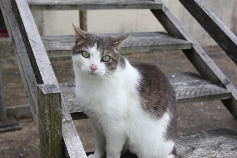 fethi - FETHI male gris et blanc né en 10/2010 Img_1611