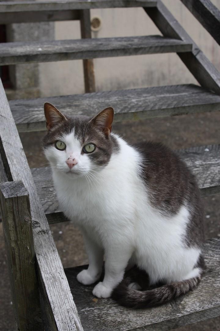 fethi - FETHI male gris et blanc né en 10/2010 Img_1612