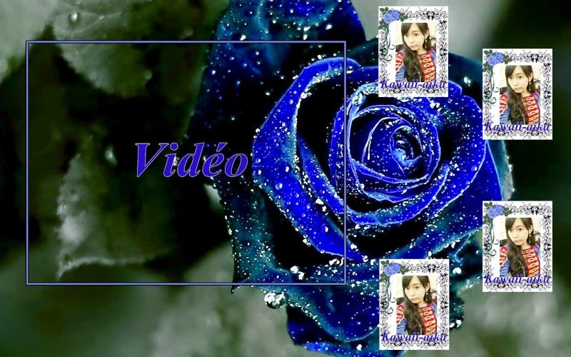 Blue Rose Blue_r10