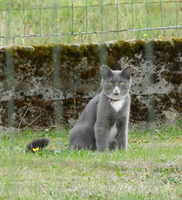 Berlioz (ancien Juki), mâle gris et blanc né 1er juin 2014 - Page 4 Berlio23