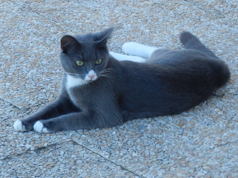 Berlioz (ancien Juki), mâle gris et blanc né 1er juin 2014 - Page 4 Berlio24