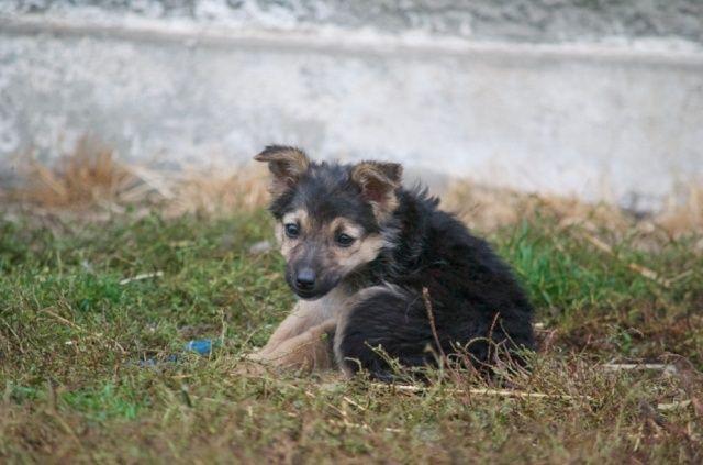 MICUTZA - Chiot femelle petite taille née en août 2015 - à Remember Me Land - réservée adoption par Charlotte (dpt01) Captur13