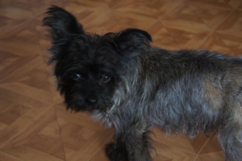 EWOK: mâle croisé cairn terrier né env 2012 - Pascani - adopté par Christine (dpt67) - Page 2 Dsc02610