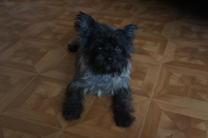 EWOK: mâle croisé cairn terrier né env 2012 - Pascani - adopté par Christine (dpt67) - Page 2 Dsc02612