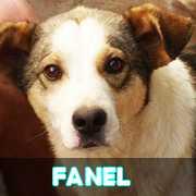 Grande campagne d'identification et vaccination à Pascani : ils ont besoin de vous ! - Page 6 Fanel11