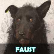 Grande campagne d'identification et vaccination à Pascani : ils ont besoin de vous ! - Page 3 Faust10