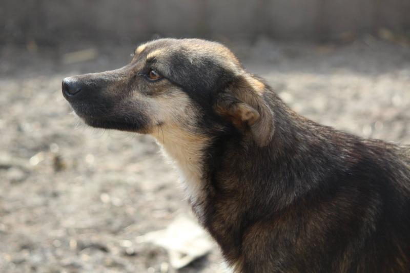 MANGUSTI - femelle, taille moyenne , née en mai 2013 (chez Anda et Alina) - adoptée par Caroline (dpt60) Mangus15