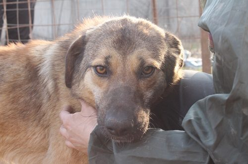 MARA, femelle, taille moyenne - en refuge chez Anda et Alina - adoptée par Samantha (74) - À REPLACER EN URGENCE Mara110