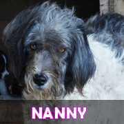 Grande campagne d'identification et vaccination à Pascani : ils ont besoin de vous ! - Page 3 Nanny11