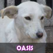 Grande campagne d'identification et vaccination à Pascani : ils ont besoin de vous ! - Page 4 Oasis10