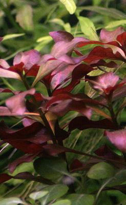 Recherche de plantes Ludwig10