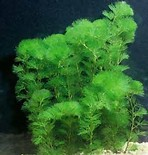 Recherche de plantes Th0eut10