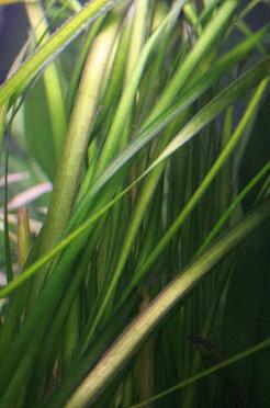 Recherche de plantes Vallis10