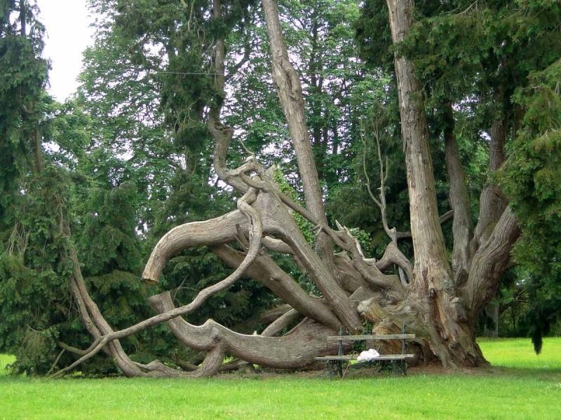 La forêt enchantée... L'esprit des bois Combou10