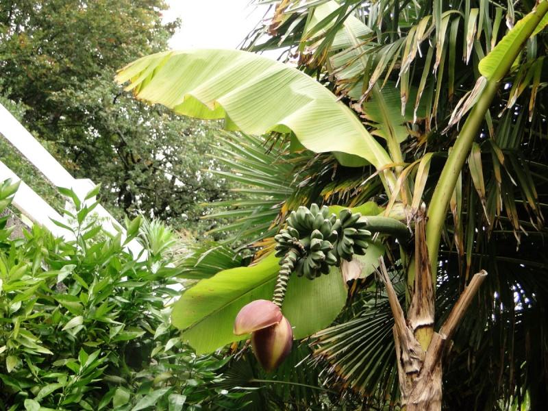 (29) Un jardin exotique à Brest Dsc01519