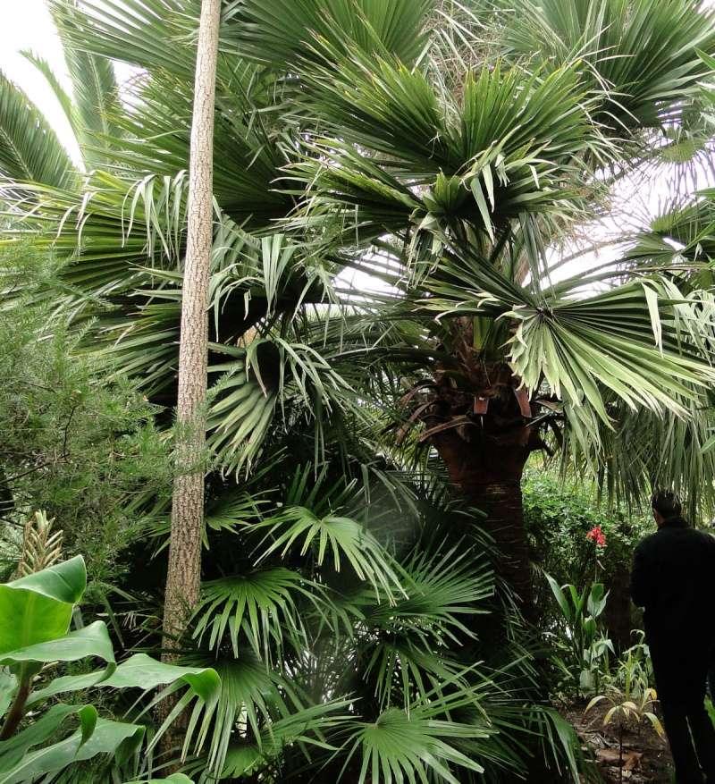 (29) Un jardin exotique à Brest Dsc01521