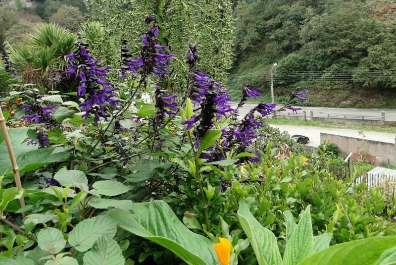 (29) Un jardin exotique à Brest Dsc01523