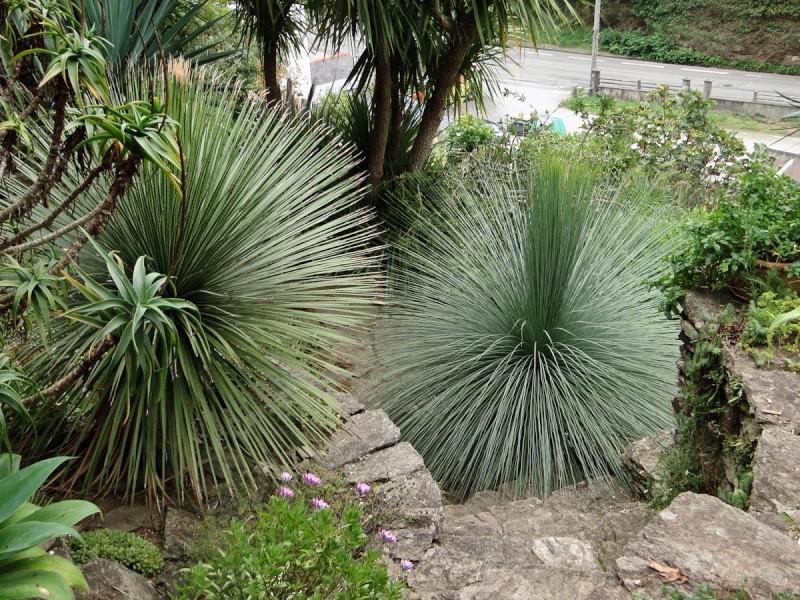 (29) Un jardin exotique à Brest Dsc01610