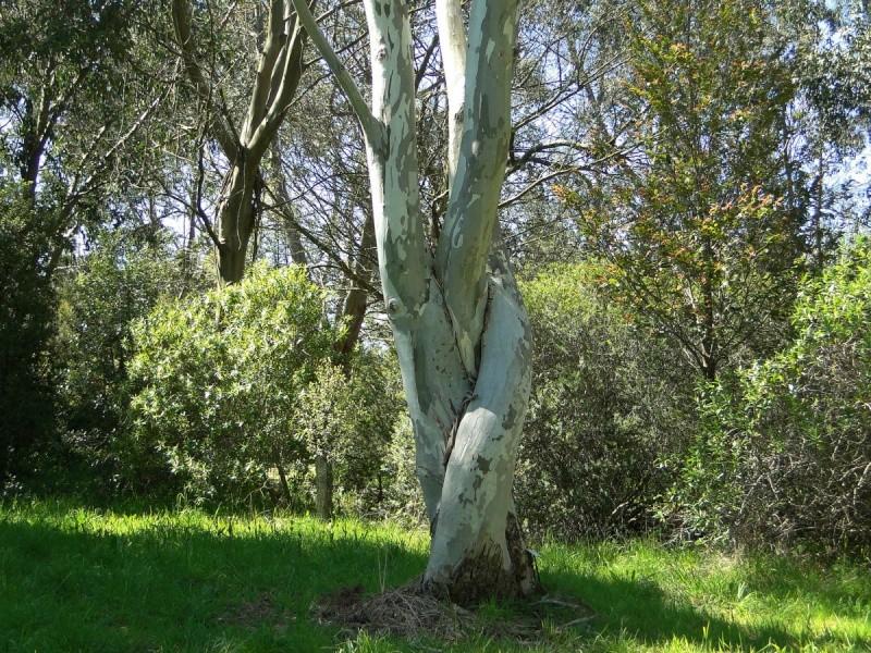 La forêt enchantée... L'esprit des bois Eucaly10