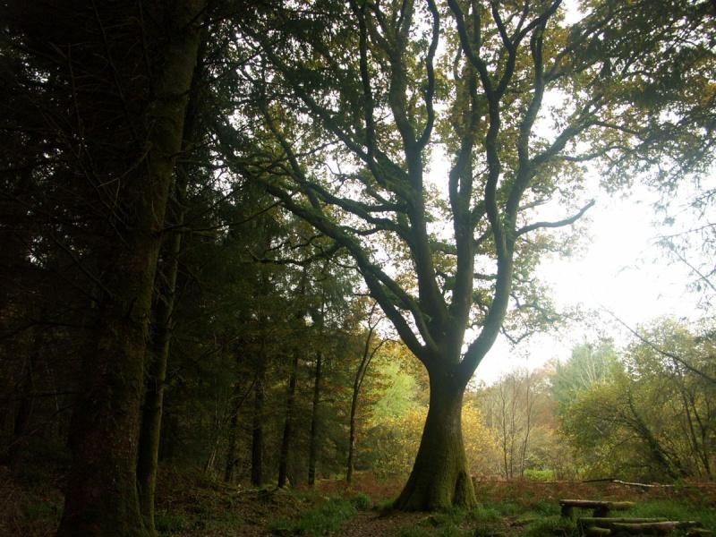 La forêt enchantée... L'esprit des bois St-riv10