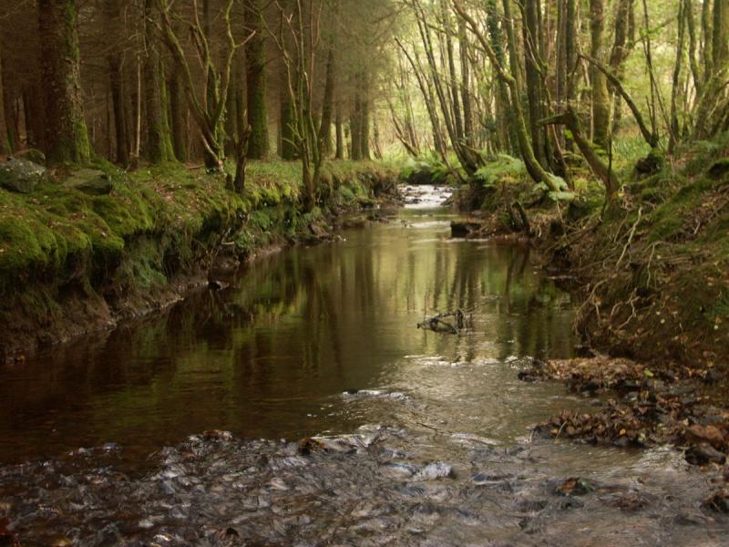 La forêt enchantée... L'esprit des bois St-riv11
