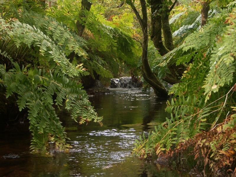 La rivière de Rivoal en Finistère St-riv12