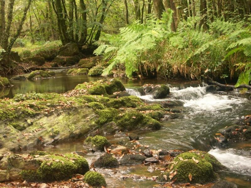 La rivière de Rivoal en Finistère St-riv18