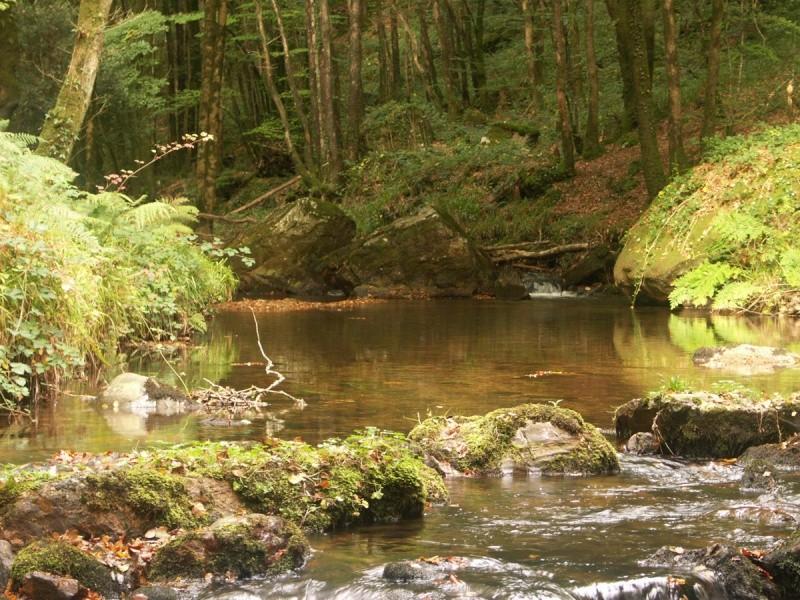 La rivière de Rivoal en Finistère St-riv19