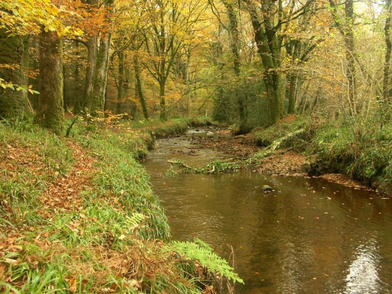 La rivière de Rivoal en Finistère St-riv22